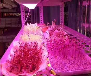 Bitki Yetiştirme Ledleri